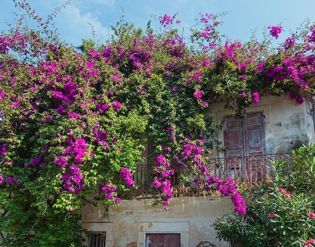 Stary dom z kwitnącym drzewem na dachu