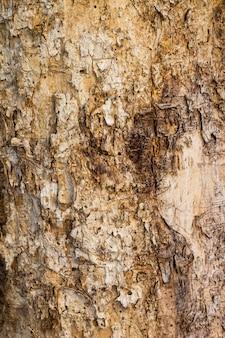 Stary drewniany drzewo w natury tekstury tła wzorze