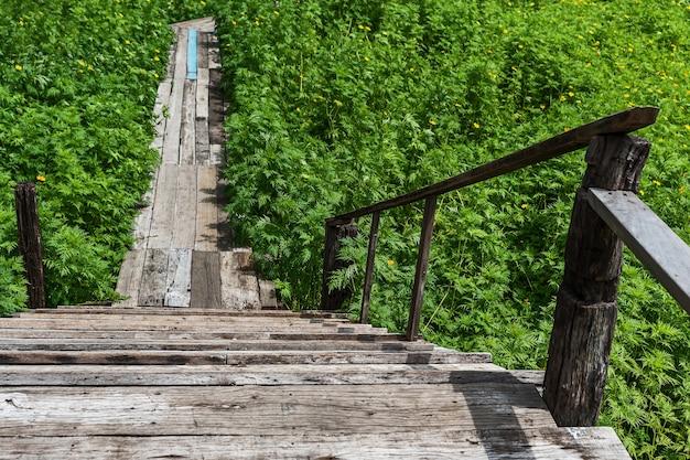Stary drewniany most w polu żółty kwiat kosmosu