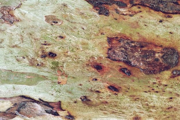 Stary drewniany naturalny tekstury tło