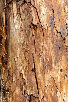 Stary drewniany pień drzewa