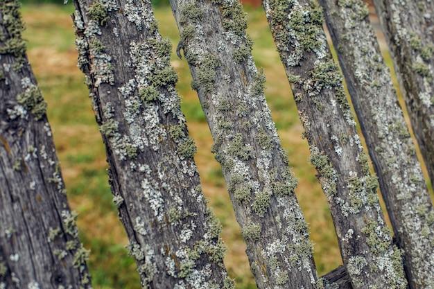 Stary drewniany płot porośnięty zielonym mchem