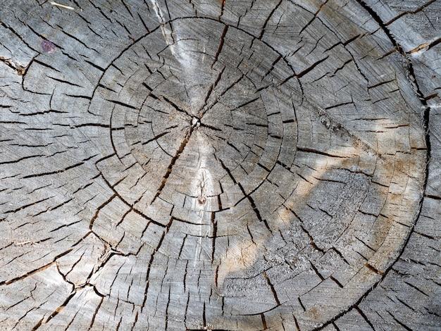 Stary dzień, chata z bali, pierścienie pęknięć. piękne drewniane tło