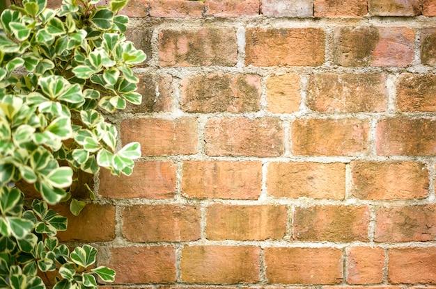 Stary grunge ceglany mur w tle