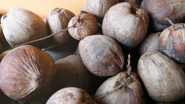 Stary kokos i kokos