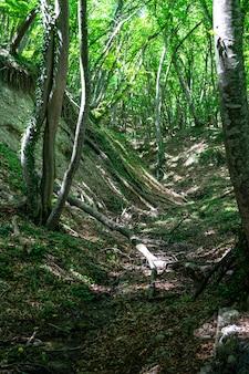 Stary las w okolicy zedazeni