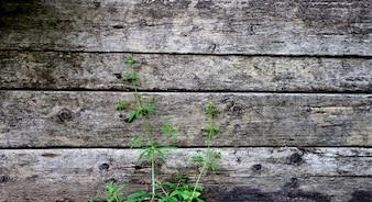 Stary tło drewna panelu