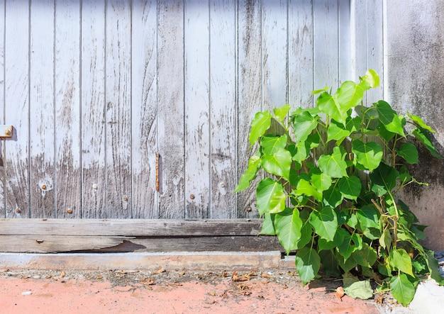 Stary wieku biały kolor malowane szorstki drewniany panel tle ściany ogrodzenia z dzikich małych roślin
