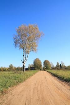 Starzejąca się brzoza w pobliżu drogi wiejskiej