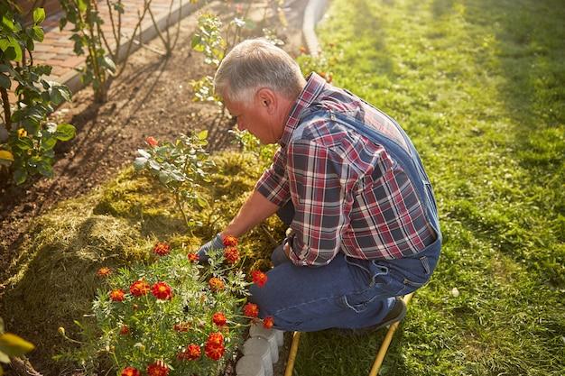 Starzejący się dżentelmen w codziennych ubraniach dbający o kwietniki w swoim ogrodzie