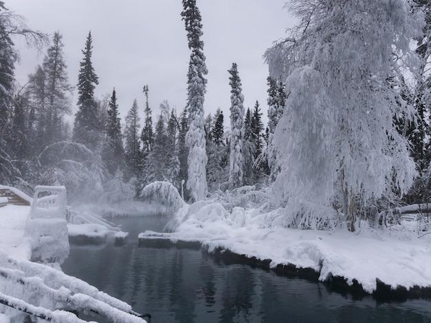 Staw w pokryte śniegiem parku, liard river hot springs provincial park, northern rockies regional muni
