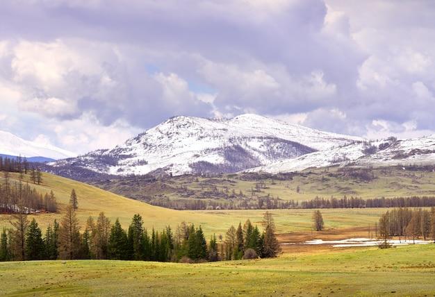 Step kurai wiosną sucha trawa na stokach ośnieżonych szczytów gór