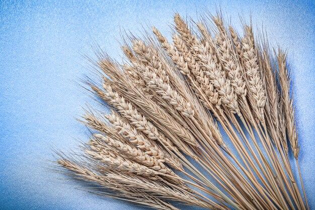 Sterta dojrzałe kłosy pszenicy żyta na niebieskiej powierzchni