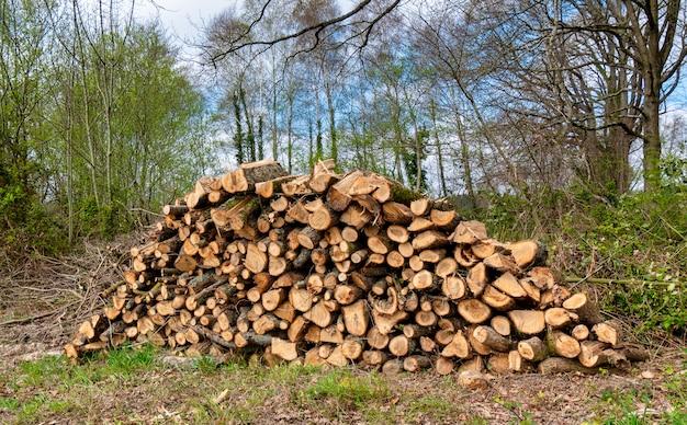 Sterta drewno w lesie