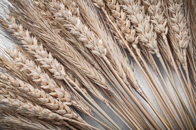 Sterta kłosów pszenicy żytniej na niebieskiej powierzchni