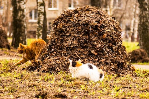 Sterta opadłych liści w parku i uliczny kot. koncepcja-jesień w przyrodzie