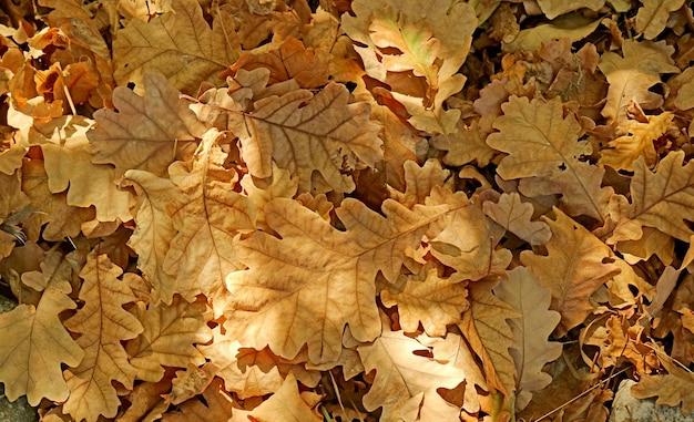 Sterta suchych jesiennych liści na ziemi