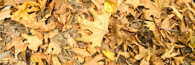 Sterta suchych zwiędłych opadłych liści jesienią