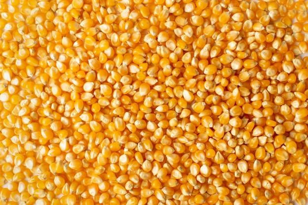 Sterta surowego ziarna popcornu tekstury tła. wzór suchych żółtych nasion kukurydzy, makieta ziaren kukurydzy lub kukurydzy cukrowej, widok z góry