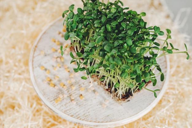 Sterty mikro-zielonych buraków na stole
