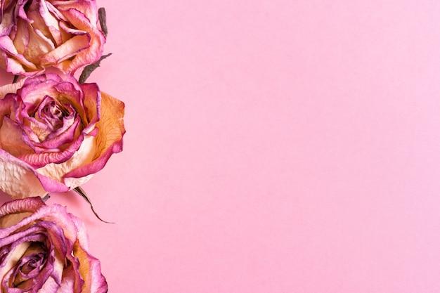 Sterty moreli w okrągłej jasnej misce z terakoty i obok niej na różowym pastelowym tle.
