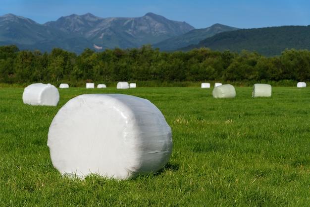 Stóg siana zapakowany w białe opakowanie z celulozy i gotowy do transportu z skoszonego pola uprawnego z zieloną trawą w słoneczny dzień. wiejski krajobraz, sucha pogoda, przy której praca rolnicza jest dobra.