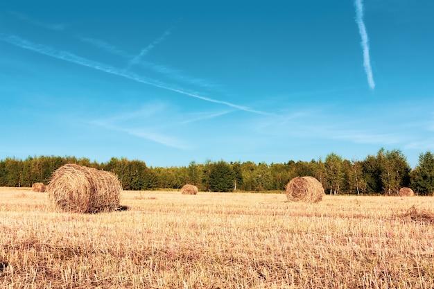 Stogi siana na polu jesienią