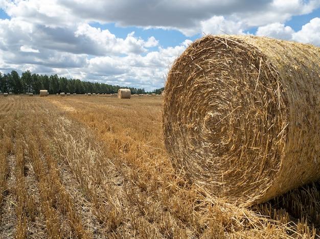 Stogi siana na polu, widok z bliska. jasny żółty i złoty stogi siana na polu uprawnym w słoneczny letni dzień.