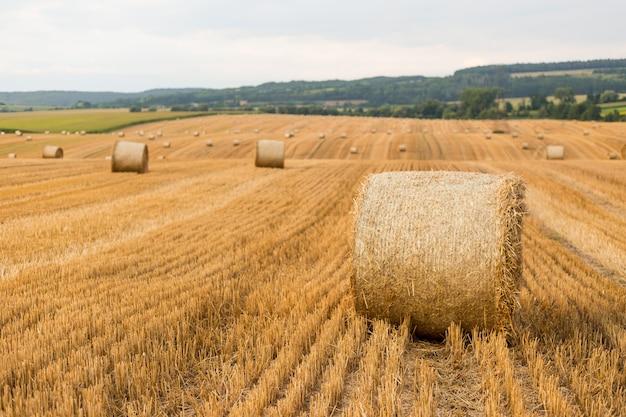 Stogi siana w polu jesienią. pszenica żółte złote zbiory latem. naturalny krajobraz wsi. bela siana
