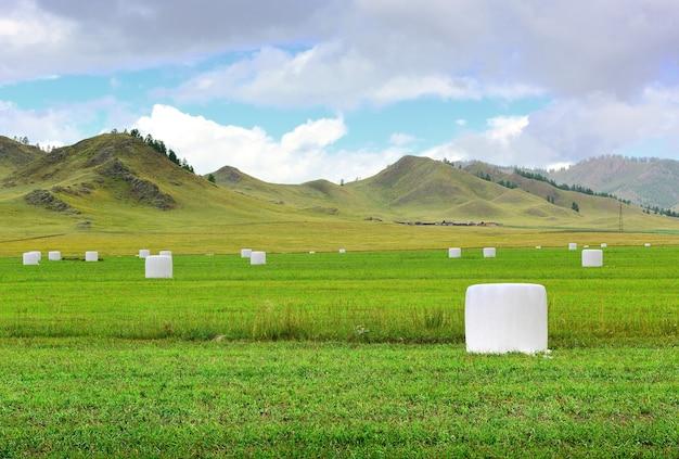 Stogi siana zapakowane w folię na tle wzgórz pod pochmurnym niebem syberia rosja