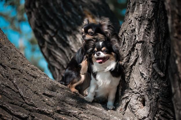 Stojąc na zwalonym drzewie w lesie sosnowym, pies na zewnątrz