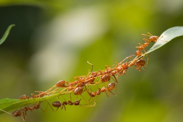 Stojak na mrówki