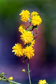 Stokrotka kwiat z żółtymi płatkami w słoneczny dzień, wiosna. nadzieja, koncepcja odnowy. wiosna przyroda, piękno, środowisko.