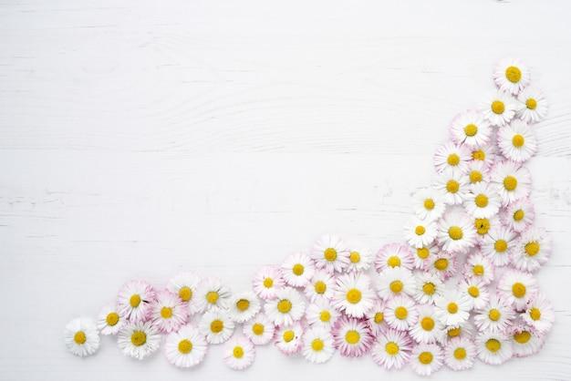 Stokrotka kwitnie na białym drewnianym tle.