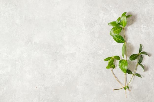 Stół sprężynowy. liście i delikatne kwiaty bzu. koncepcja wiosna i natura. skopiuj miejsce