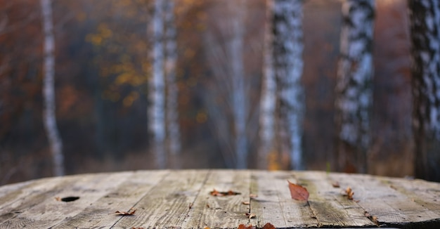 Stół w lesie brzozy