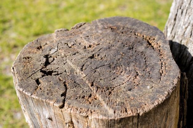 Stół z drewna z zieloną trawą. . gotowy do wyświetlania produktu.