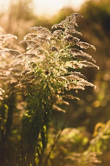 Stonowane zdjęcie zbliżenie trawy rosnącej na jesiennym polu