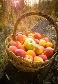 Stonowany wiklinowy kosz pełen czerwonych jabłek