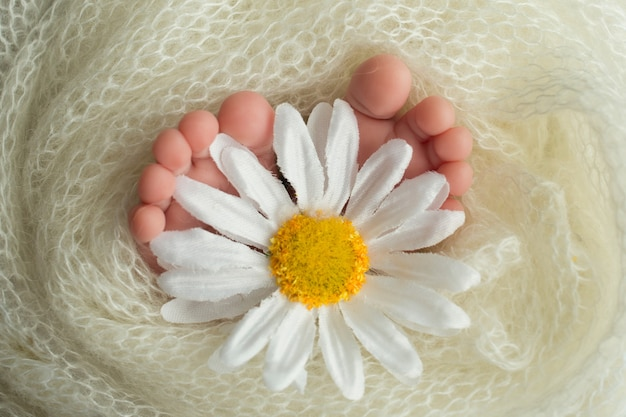 Stopy noworodka owinięte są w kocyk z dzianiny. palce noworodka trzymają biały kwiat rumianku. zdjęcie wysokiej jakości