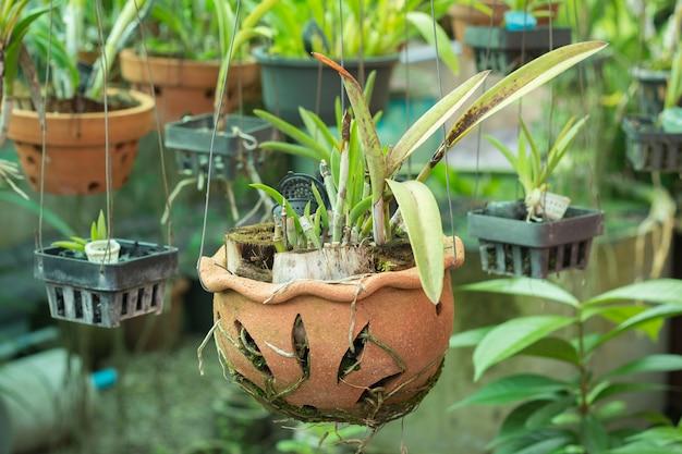 Storczykowe doniczki na szkółce roślinnej
