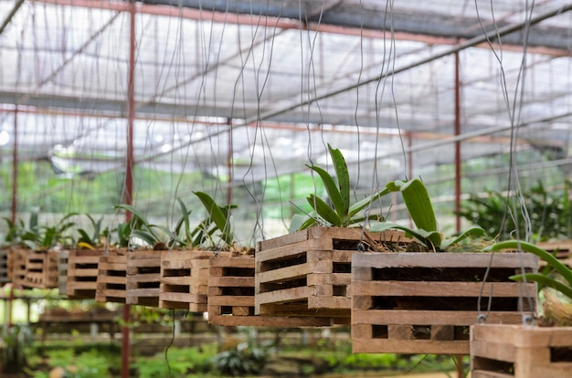 Storczykowe rośliny w szklarni