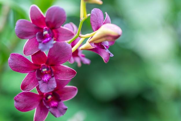 Storczykowy kwiat w ogródzie przy zimy lub wiosny dniem.