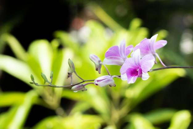 Storczykowy kwiat w ogródzie