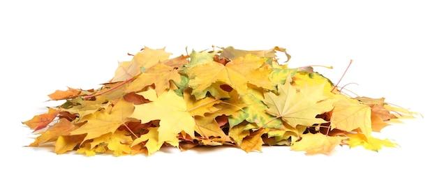 Stos jesiennych liści na białym tle