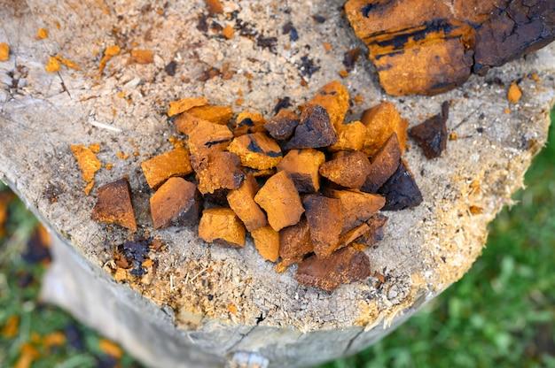 Stos kawałków posiekanych i obranych grzybów brzozy chaga są ułożone na drewnianym pniu. krok po kroku