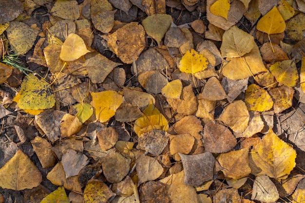 Stos liści na ziemi jesienią w alcoi.