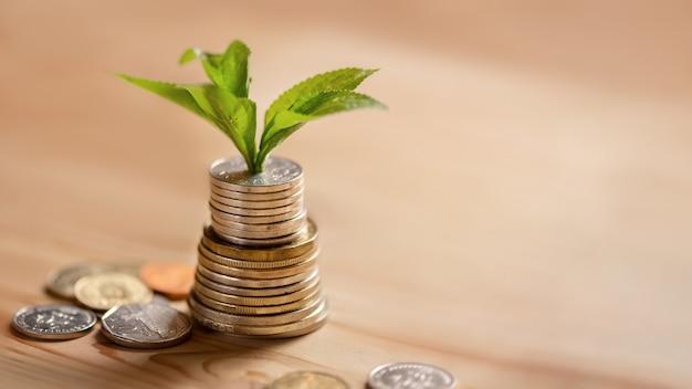 Stos monet, przez które kiełkuje młode drzewo. koncepcja wzrostu, pasywnego dochodu i inwestycji biznesowych