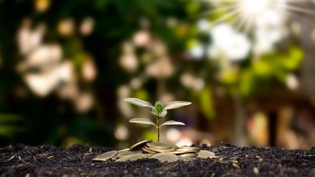 Stos monet z drzewem na szczycie dla pomysłów na rozwój biznesu i oszczędności