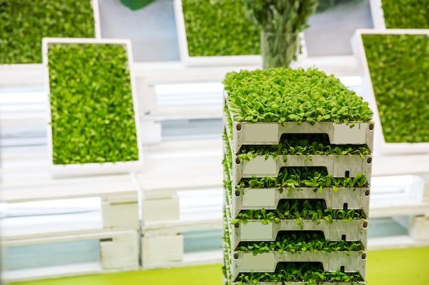 Stos pudełek z roślinnością z bliska